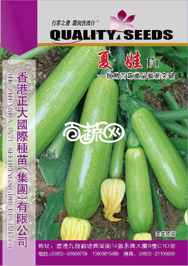 春夏播种,高产耐热 Oriental Squash Seeds 10粒中国西葫芦,角瓜,水瓜种子 1 bag of 10
